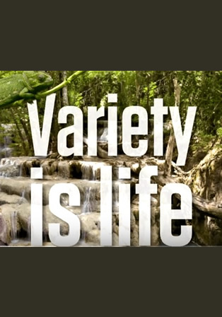 variety-is-life