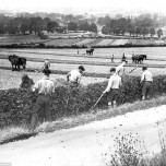 Farm workers, UK, 1940s