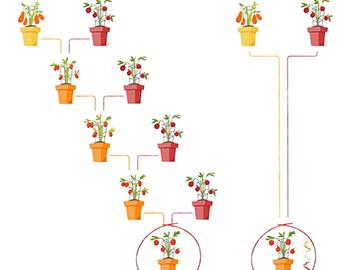 Modern Gene Editing techniques DNA characteristics (EN)
